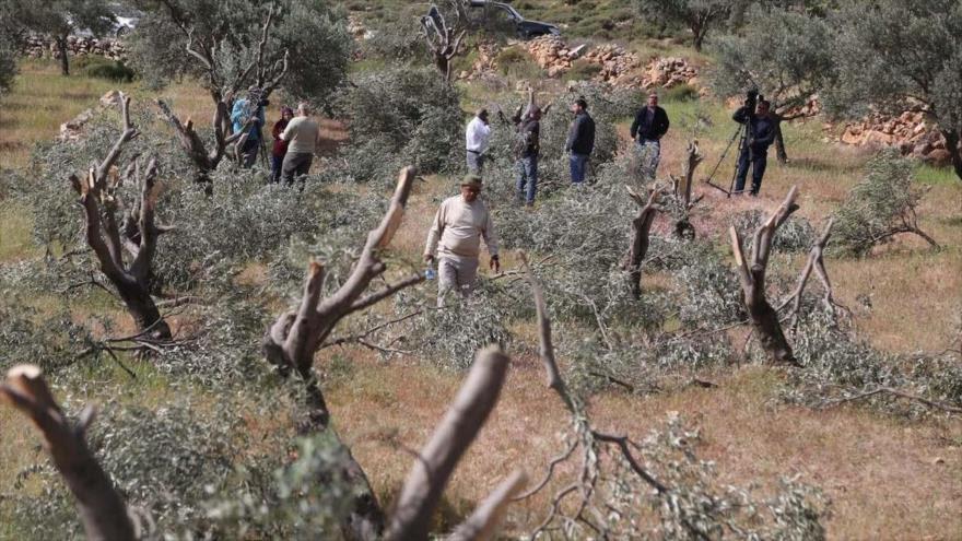 Israel elimina la vegetación de la Franja de Gaza con herbicidas
