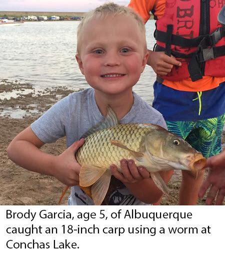 2019 NM Fishing Reports - ABQSportfishing
