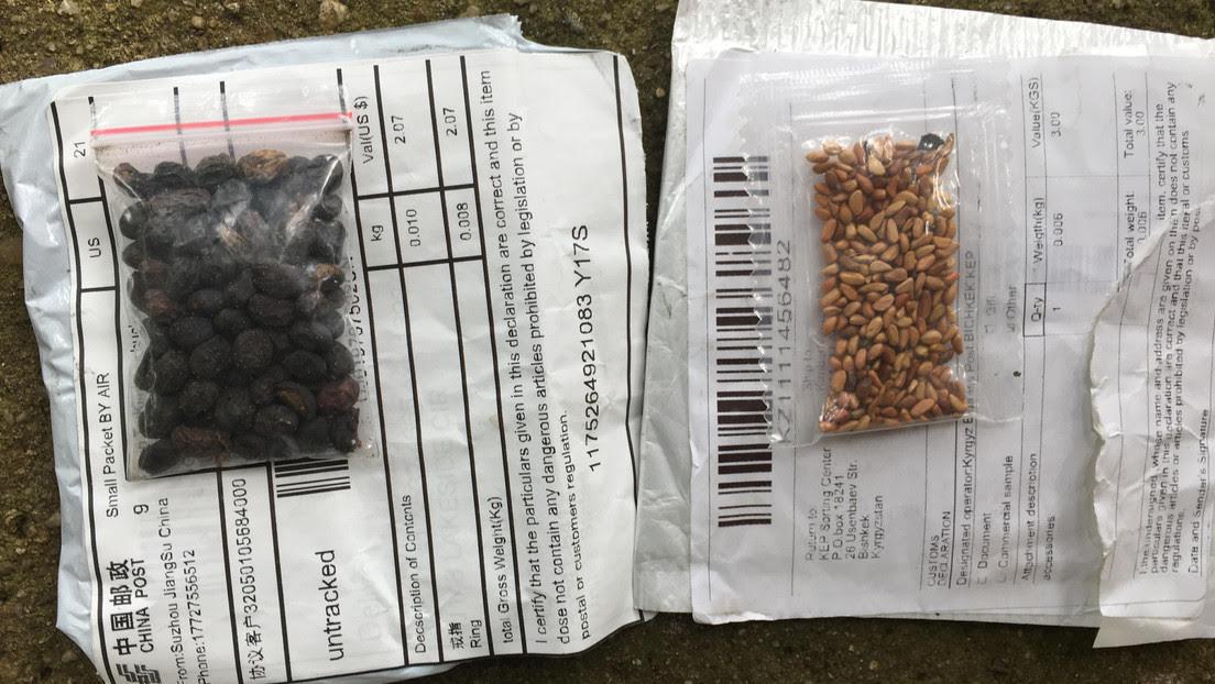 Identifican algunas de las semillas misteriosas enviadas a estadounidenses desde China