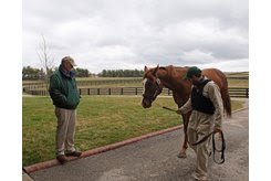 Billy Sellers watches Catalina Cruiser walk into the stallion barn at Lane's End Farm