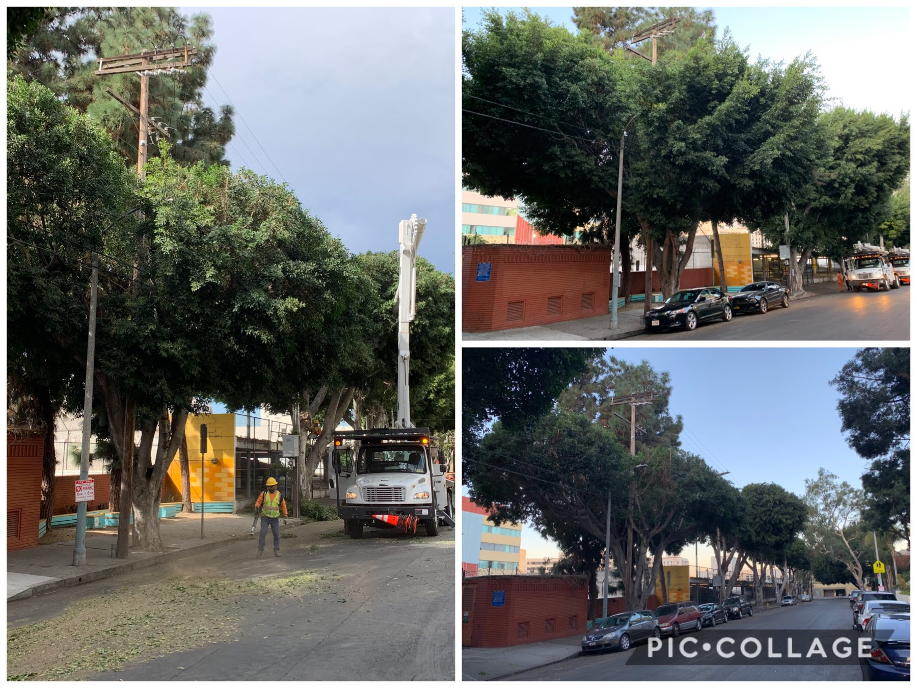 5th St. Tree Trimming in Pico Union