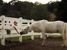 Studies show need for equine encephalitis surveillance beyond horses