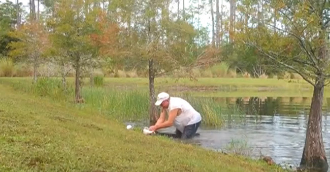 Man saves his puppy from the jaws of an alligator