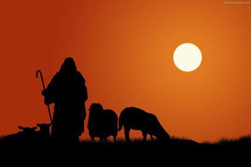 shepherd-sheep_10859