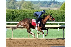 Stakes winner Lemoona, bought by Thomas Clark Bloodstock, trains at Keeneland