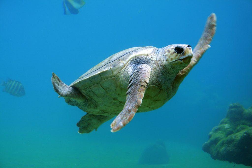 La imagen tiene un atributo ALT vacío; su nombre de archivo es turtle-691040_1920-1024x683.jpg