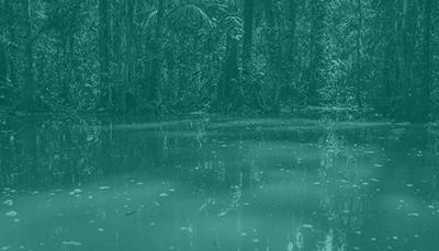Environnement & Ressources Naturelles