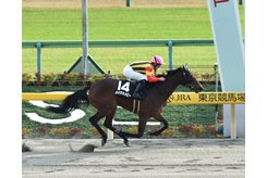 Make Happy wins the Cattleya Sho at Tokyo Racecourse