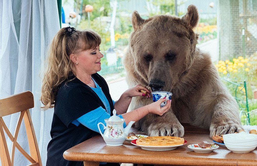 http://www.boredpanda.com/adopted-bear-russian-family-stepan/?image_id=adopted-bear-russian-family-stepan-a3.jpg