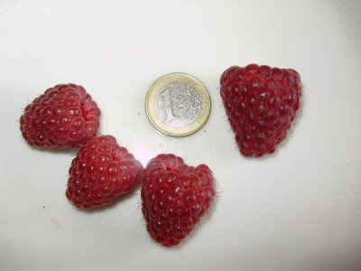 Raspberry Joan J size comparison with 1 euro coin