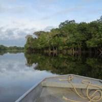 Terreur au Brésil et dans l'Amazonie : la forêt se meurt. Appel au boycotte de tous les produits brésiliens !