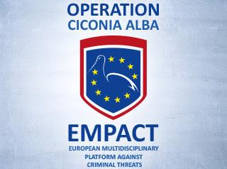 ciconia alba