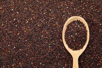 Cooperativa Agroindustrial Machu Picchu exportará 22 toneladas de quina a Países Bajos
