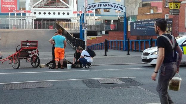 Two arrested after horse collapses in city centre