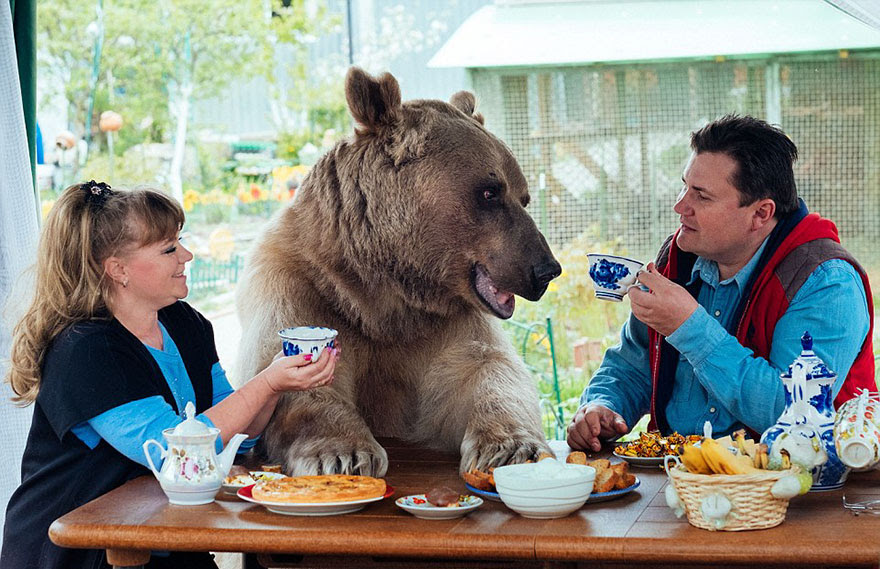 http://www.boredpanda.com/adopted-bear-russian-family-stepan/?image_id=adopted-bear-russian-family-stepan-a20.jpg