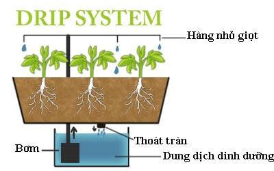 Hệ thống thủy canh nhỏ giọt (Drip systems)
