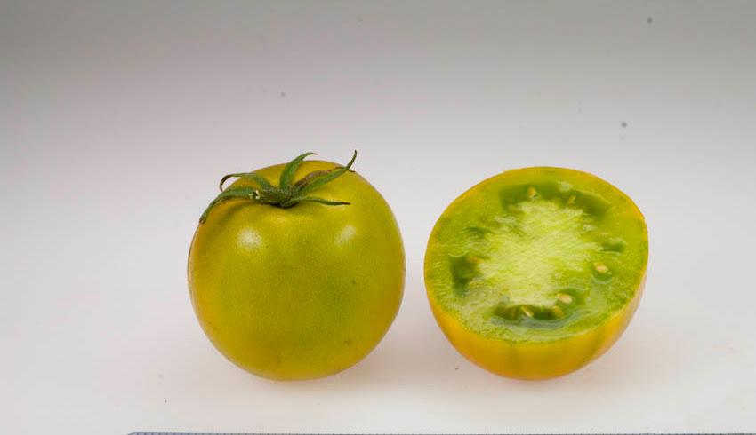 Paradicsomlime zöld saláta