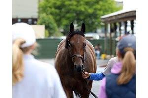 Buyers inspect a juvenile ahead of Fasig-Tipton's Midlantic sale