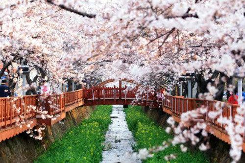 Sake Moments April 2017 A
