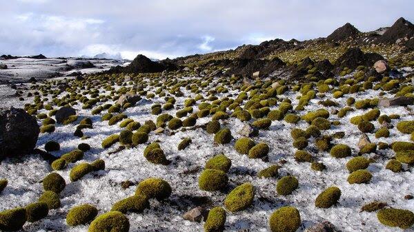 Glacier mice in Iceland.