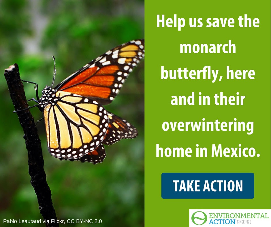 Help monarchs: Stop deforestation in Mexico