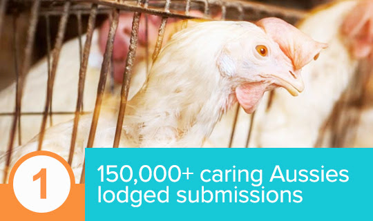 More than 150,000 people penned personal submissions for hens