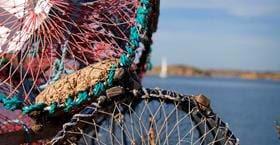 Lobster Fishing at Sea Lodge Smögen
