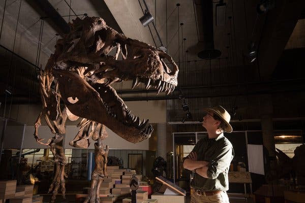 Image result for scotty sue t rex