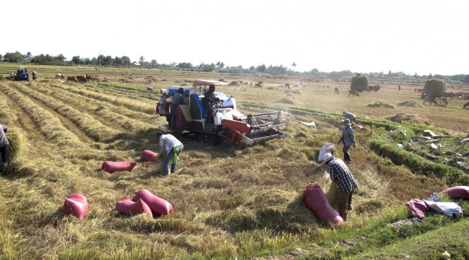 El sur de Asia y en África del Oeste, son los mayores productores agrícolas / Foto: Pxhere