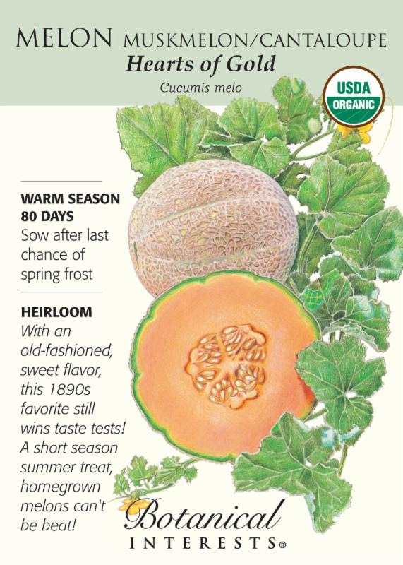 Muskmelon Cantaloupe Honeydew What S The Difference Watters Garden Center To begin with, honeydew and cantaloupe are melons which belong to the gourd family (cucurbitaceae). muskmelon cantaloupe honeydew what