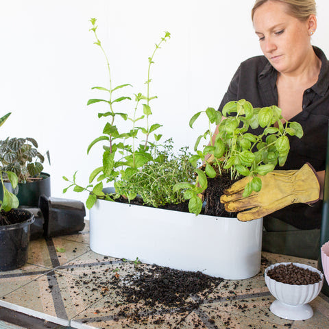 Step 4: How To Create Your Own Herb Garden