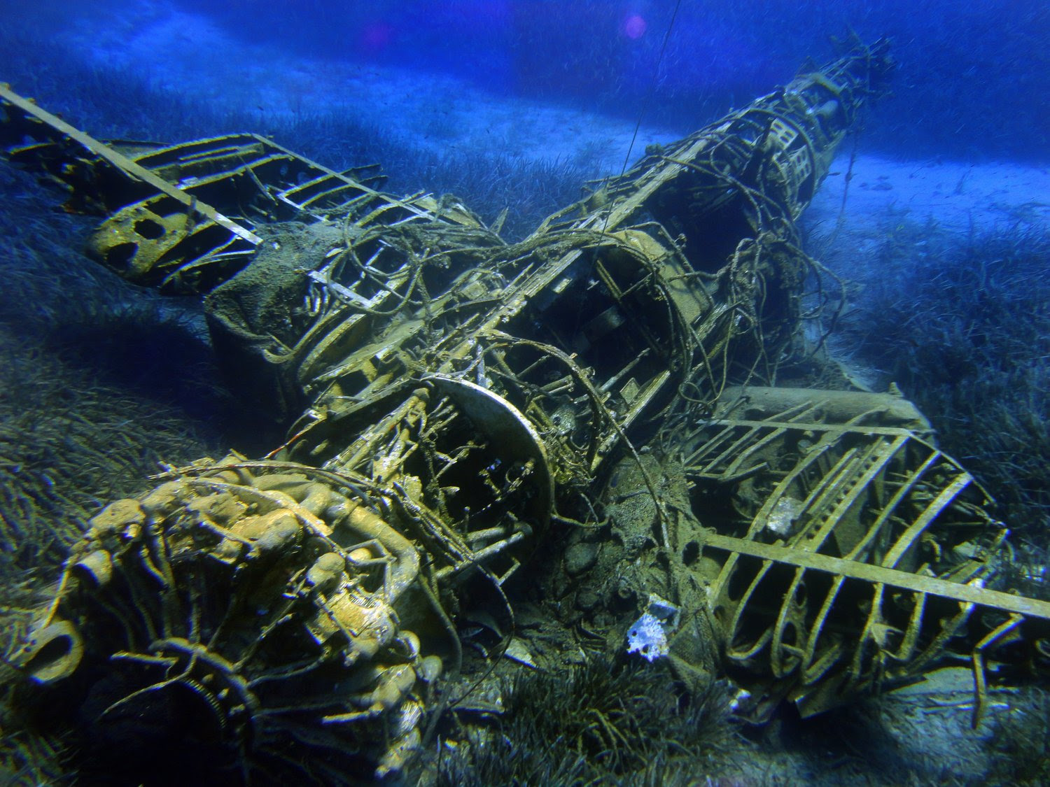 Amazing dive sites can be accessed via Liveaboards.