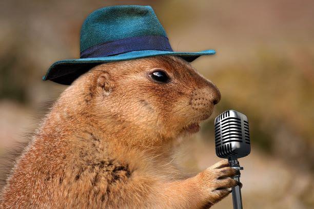 speaker prairie-dog-1470659_1280 pixabay