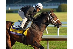 Global Campaign trains at Keeneland Nov. 5 ahead of the Breeders' Cup Classic