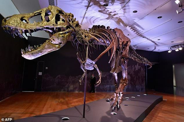 Massive T-rex skeleton 'Stan' could fetch $8million at NY auction  - Big World Tale