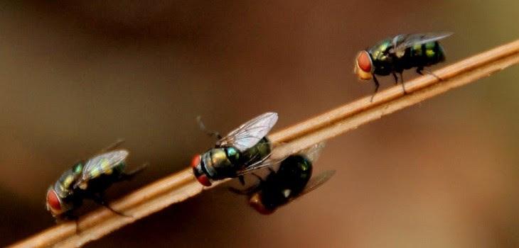 App para ahuyentar mosquitos y insectos