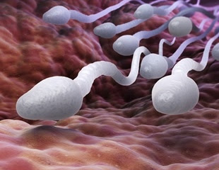 Father's age shown to affect health of offspring