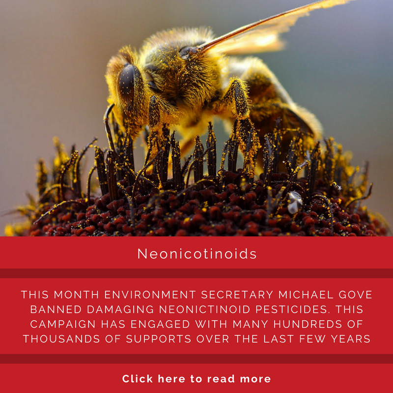 Neonic.png