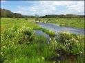 Tidmarsh restoration Audubon border