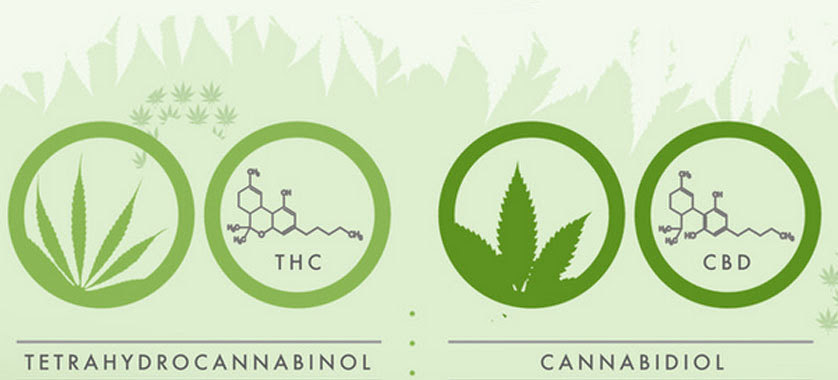 difference-between-thc-cbd