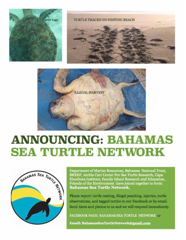 Bahamas Sea Turtle Network