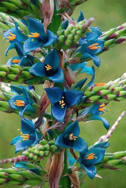 Magično cveće! 0