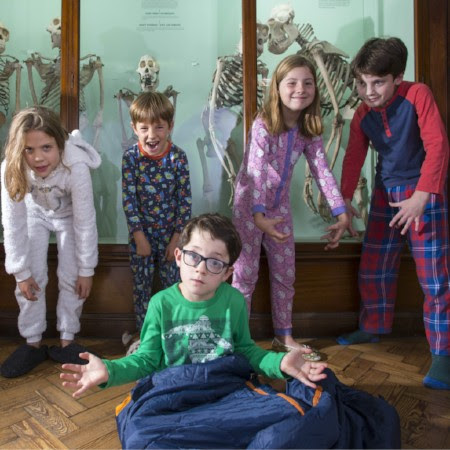 Children having fun in front of the skeleton case  in the Natural History Gallery
