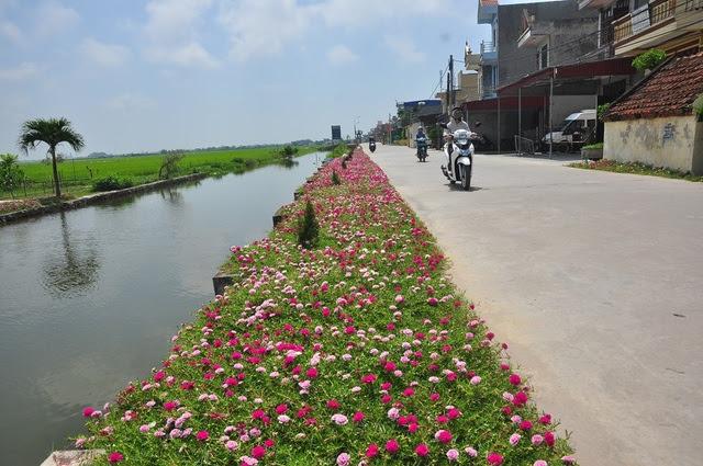 Khi những hình ảnh con đường hoa mười giờ ở Nam Định được đăng tải trên mạng, nhiều người tỏ ra thích thú và ví đây là những con đường hoa đẹp nhất Việt Nam. Thậm chí, nhiều bạn trẻ, khách du lịch cũng tranh thủ về đây chụp ảnh, chiêm ngưỡng những cung đường hoa rực rỡ.