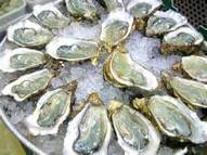 Picture of oysters on the half shell