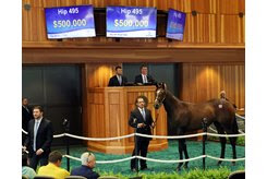 The Outwork filly consigned as Hip 495 by Denali Stud in the ring at the New York-Bred Sale