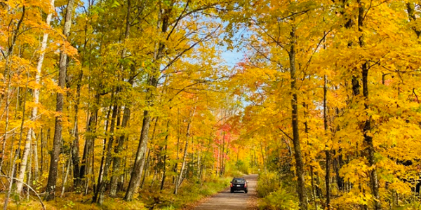 Image of colorful trees at Savanna Portage State Park