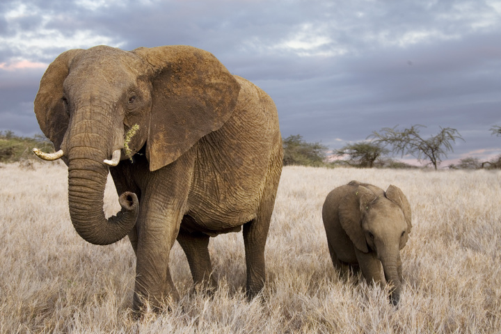 Photo of an elephant and its calf
