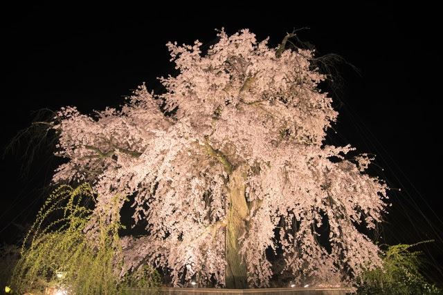 京都随一の桜の名所「円山公園」観光前後のお食事におすすめです。